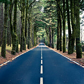 'Road in the Wood, Canary Islands'