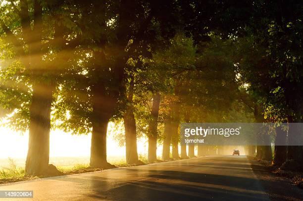Chestnut alley von foggy Morgen