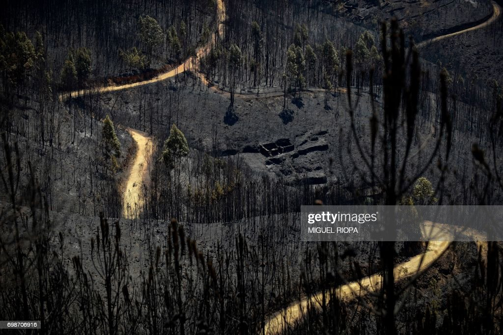 TOPSHOT - A road meanders amongst burnt forest areas affected by a wildfire in Vale do Cambra, some 30 km to Pedrograo Grande, on June 20, 2017. The huge forest fire that erupted on June 17, 2017 in central Portugal killed at least 64 people and injured 135 more, with many trapped in their cars by the flames. RIOPA