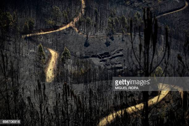 TOPSHOT A road meanders amongst burnt forest areas affected by a wildfire in Vale do Cambra some 30 km to Pedrograo Grande on June 20 2017 The huge...