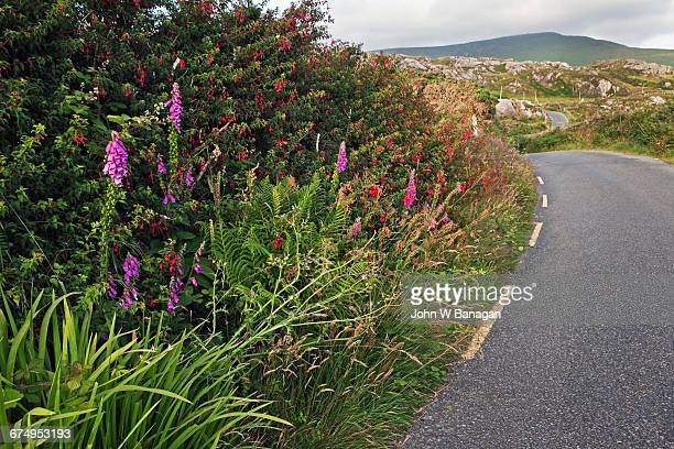 Road near Allihies, Beara Peninsula,Cork Ireland