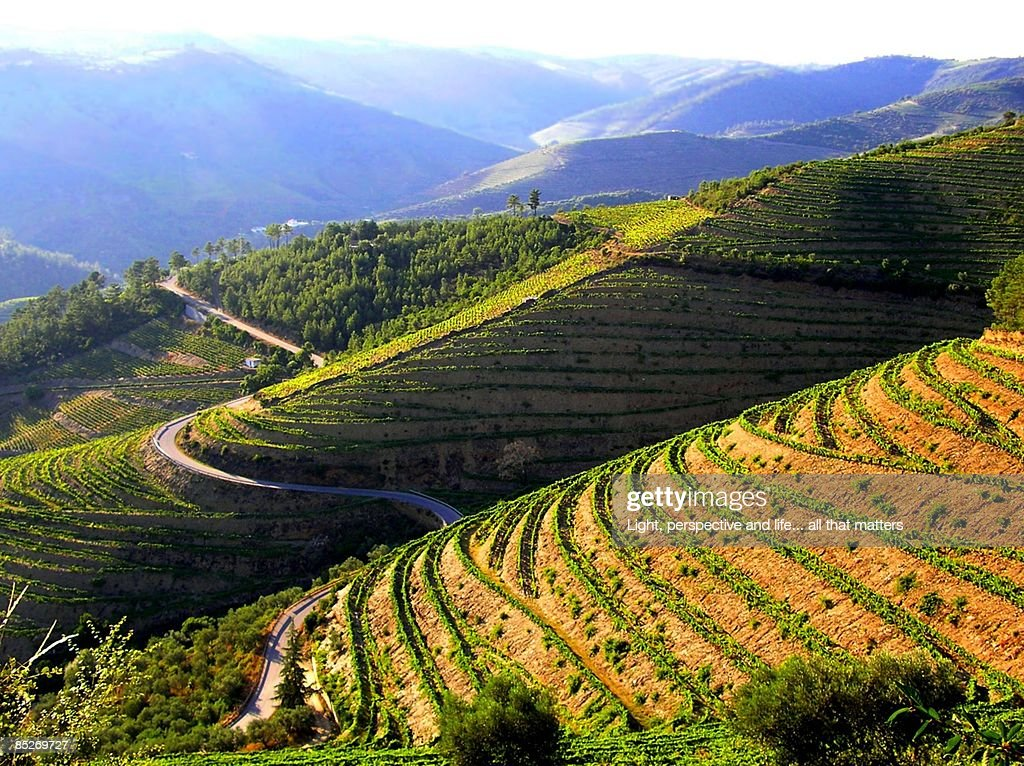 Road on rice terraces : Stock Photo