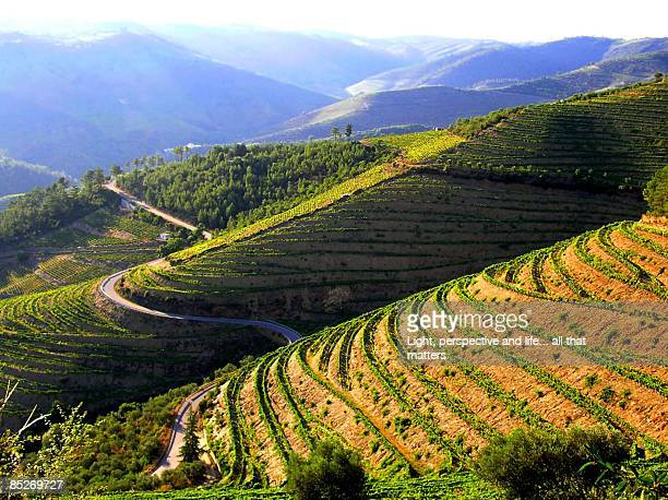 Road on rice terraces