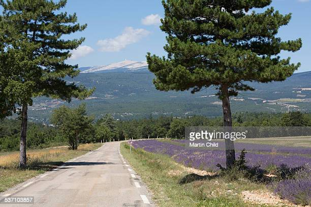 Road passing lavender fields in Provence