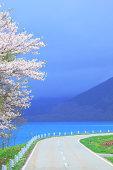 Road, sea and cherry tree, Akita Prefecture
