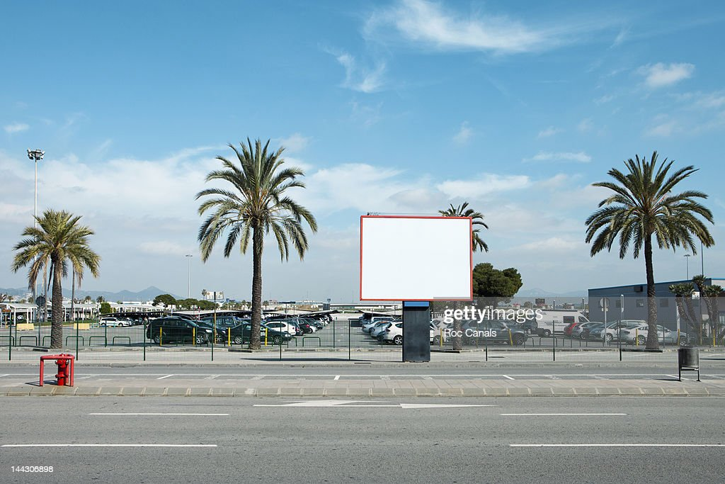 Road side palm trees : Stock Photo