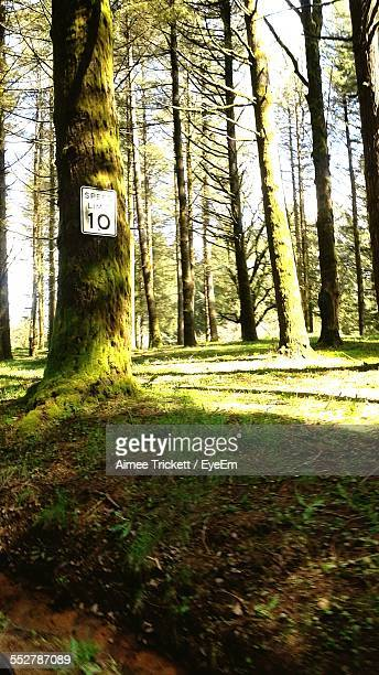 Road Sign On Tree In Forest