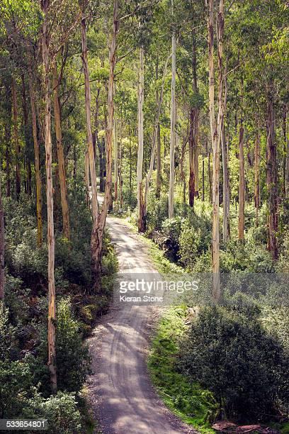 A road through Australian bush
