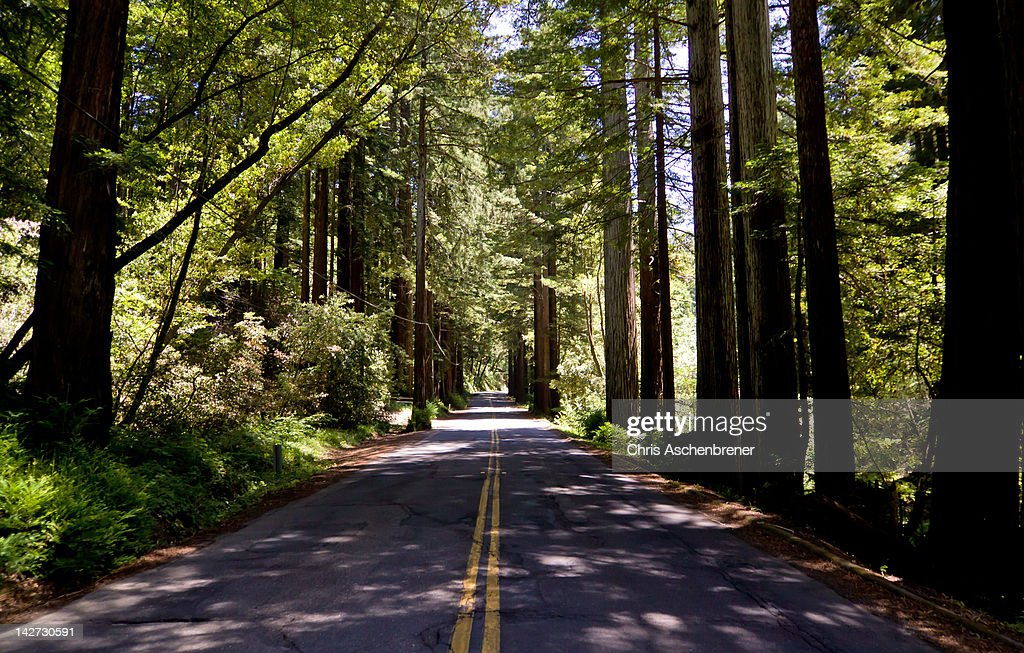 Road through coastal redwood grove : Stock Photo