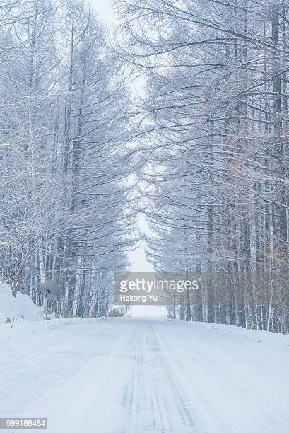Road through forest in winter, Hokkaido, Japan