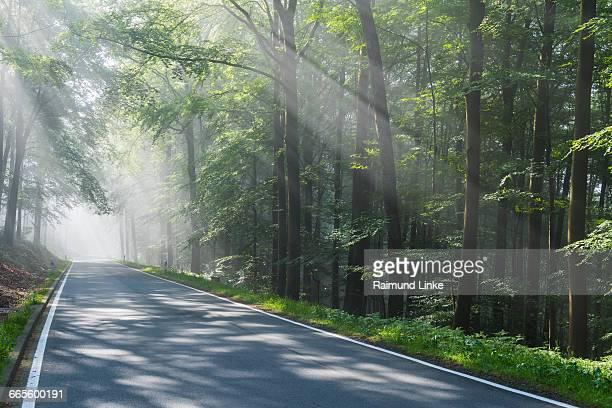 Road through forest with haze and sunbeams