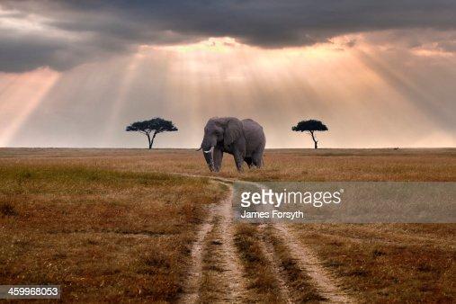 Road through Mara