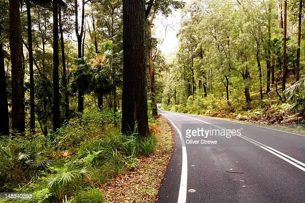 Road through rainforest.