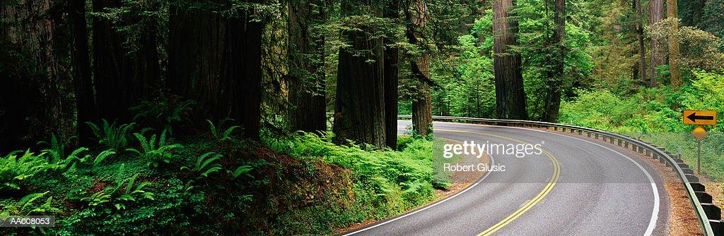 Road Through Redwood National Park : Stock Photo