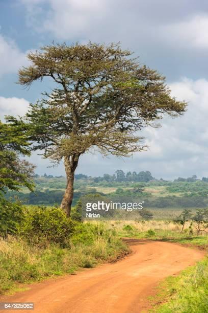 Weg door de savanne