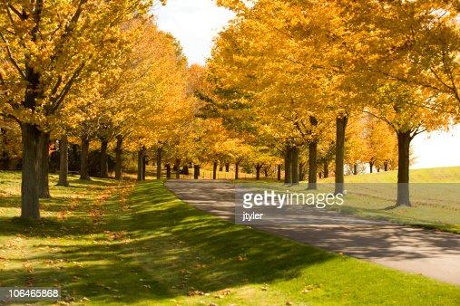 Road Through the Autumn Trees
