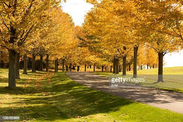 Strada attraverso gli alberi in autunno
