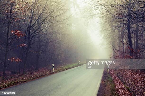 Route à travers la forêt.