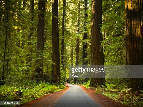 Road から、広々としたレッドウッドの木