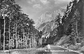 Road through the mountains pine forests and high peaks Neue Gessusestrasse Germany 1936