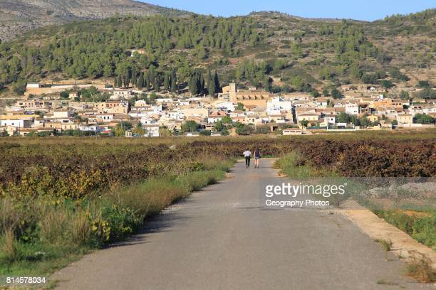Road through vineyard to village of Lliber Marina Alta Alicante province Spain