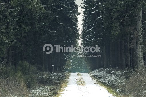 road to a dark winter forest stock photo thinkstock
