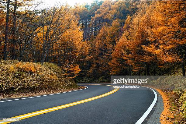 Road to autumn paradise