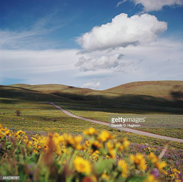 Road Traveling Through Fields Of Wildflowers