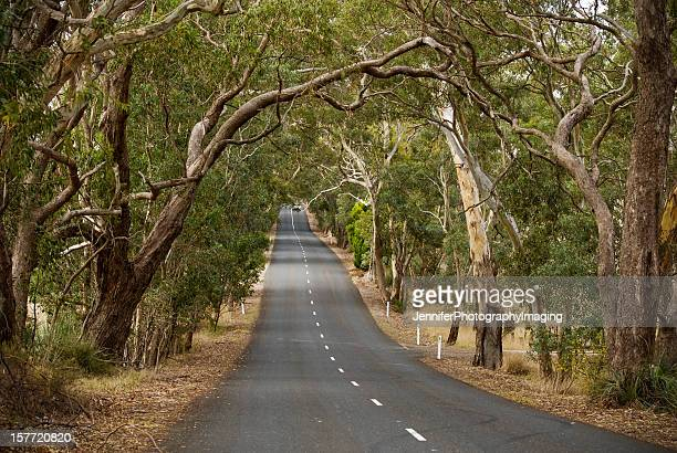 Road trip through the Gum Trees