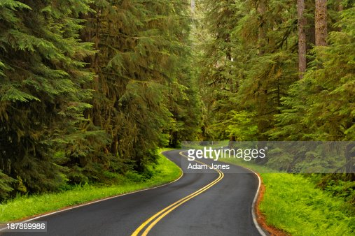 Road winding through lush forest