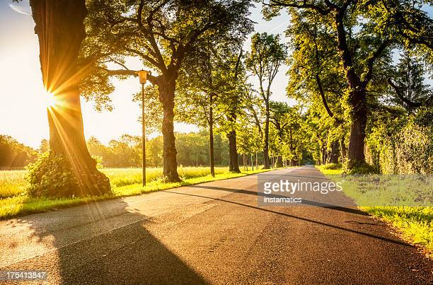Road with evening sunlight