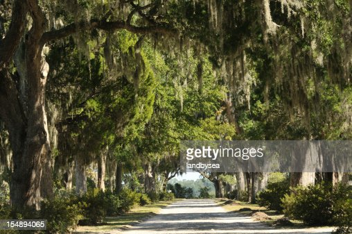 Road with Live Oaks in Savannah