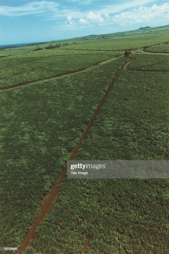 Roads through crop, Maui, Hawaii : Stock Photo