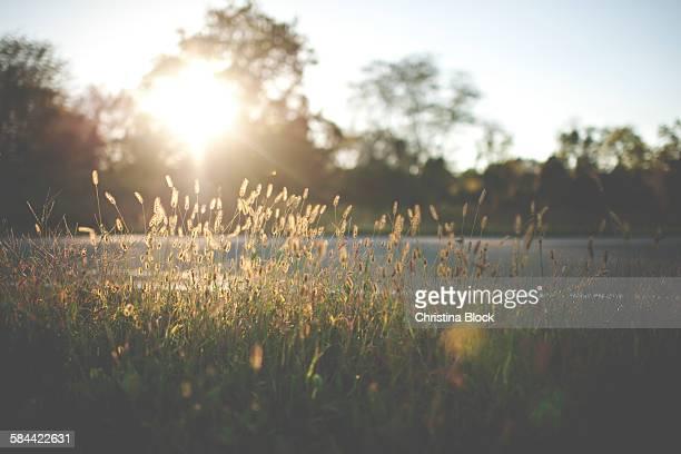 Roadside Meadow in rural New Jersey