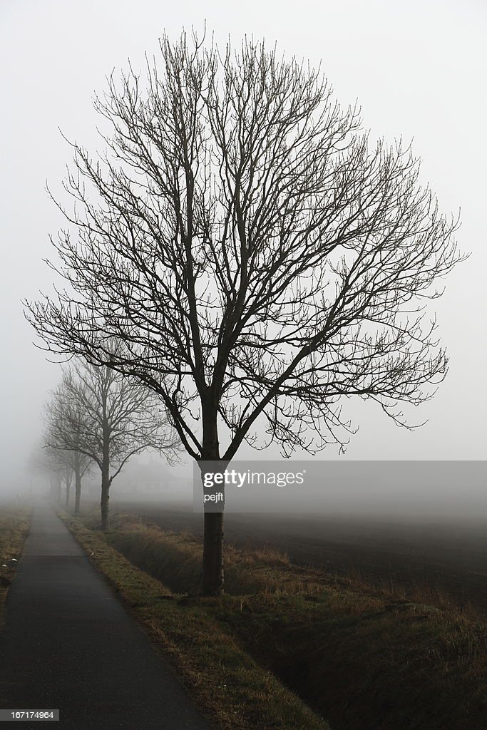 Roadside tree on a very foggy day : Stock Photo