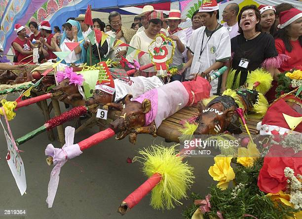 Roast pigs dressed in traditional costumes are put on display as part of a Christmas parade reenacting the roast pig parade in Manila 18 December...