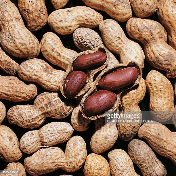 Roasted peanuts with pod Fabaceae
