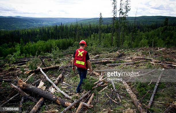 Rob Ballinger a field supervisor for West Fraser Timber Co surveys a block of land currently being harvested west of Quesnel British Columbia Canada...