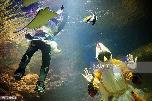 Robban Tranefalk and Lisa Westberg feed the fish candy dressed as Easter witches at the Aquaria Vattenmuseum in Stockholm Sweden on March 24 2016...