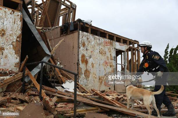 Robert Grant and Rocky from the Texas Task Force 2 search and rescue team work through a destroyed apartment complex trying to find anyone that still...