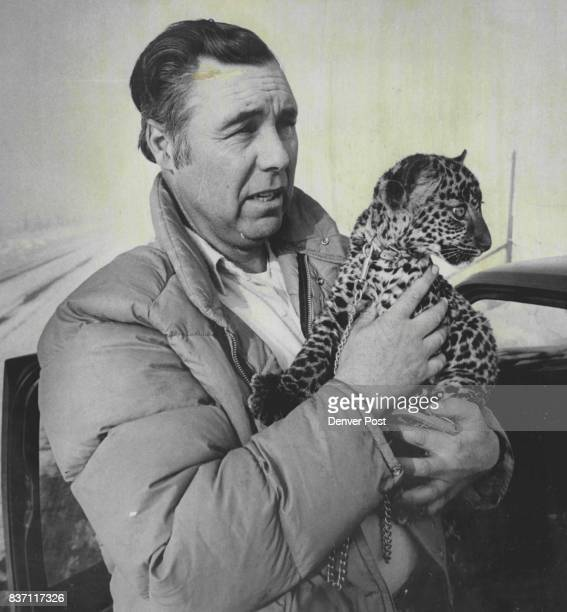 Robert Hawkins With Spotted Leopard A Favorite He has been collecting exotic animals for several years Credit Denver Post Inc