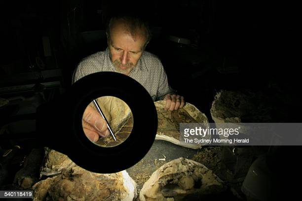 Robert Jones Paleontology Collection Manager at the Australian Museum in Sydney with dinosaur bones A new exhibit called 'Dinosaur Unearthed' opening...