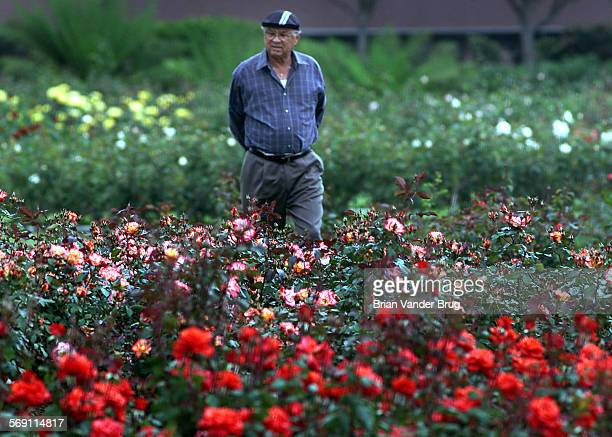 Robert Smith of Los Angeles strolls through the rose garden during the Exposition Park Blooming of the Roses Festival April 19 2001 DIGITAL IMAGE