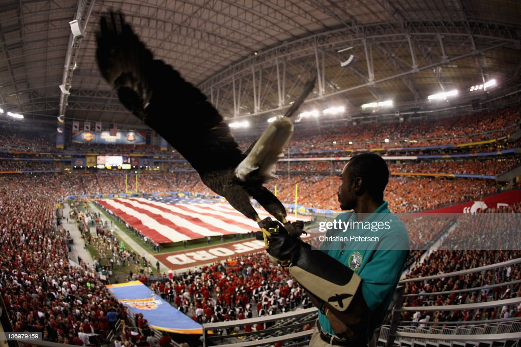Robert West of the American Eagle Association releases 'Challenger' during National Anthem before the Tostitos Fiesta Bowl between Oklahoma State Cowboys and Stanford Cardinal on January 2, 2012 at University of Phoenix Stadium in Glendale, Arizona.