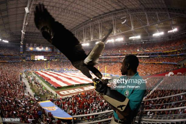 Robert West of the American Eagle Association releases 'Challenger' during National Anthem before the Tostitos Fiesta Bowl between Oklahoma State...