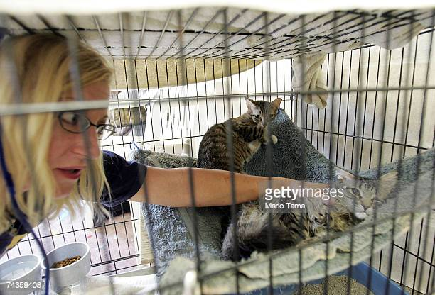 Robin Beaulieu tends to homeless cats at Animal Rescue New Orleans headquarters May 30 2007 in New Orleans Louisiana The grassroots group shelters...