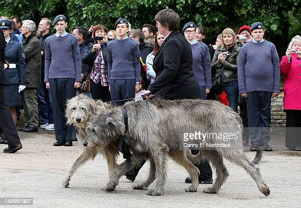 Robin Gibb's two Irish Wolfhounds follow the cortege at the funeral of Robin Gibb held at St Mary's Church Thame on June 8 2012 in Oxford England