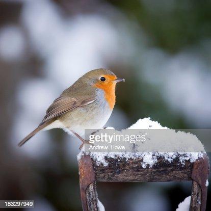 Robin on a Handle