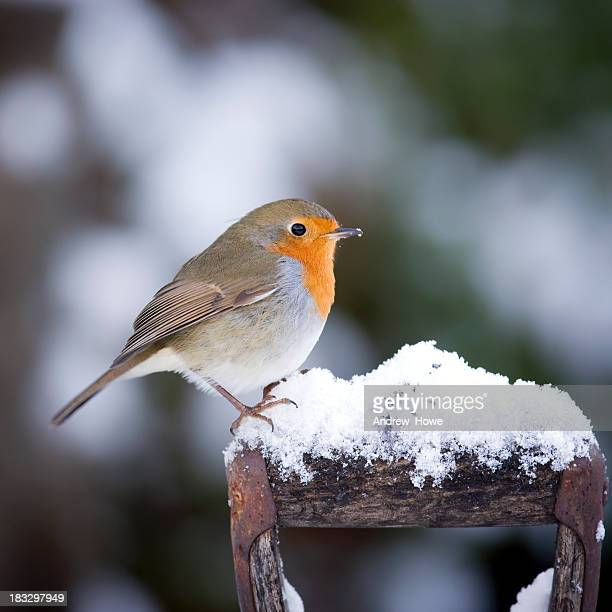 Robin on a Handle