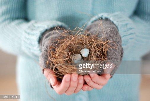 vogeleier rotkehlchen stock fotos und bilder getty images. Black Bedroom Furniture Sets. Home Design Ideas
